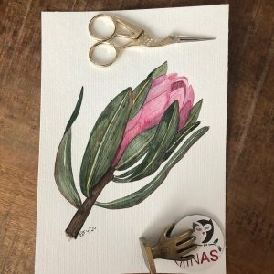 Protea Aquarell