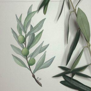 Olive gruen